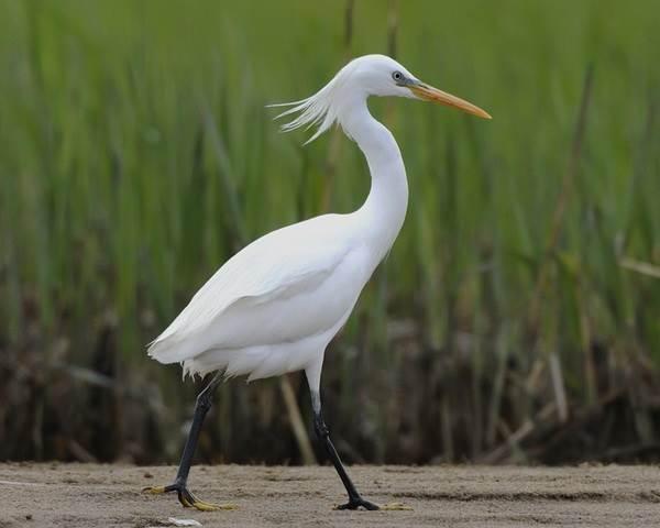 Птицы-озёр-Описания-названия-виды-и-особенности-птиц-живущих-на-озерах-10