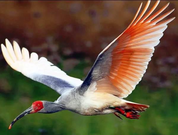 Птицы-озёр-Описания-названия-виды-и-особенности-птиц-живущих-на-озерах-12