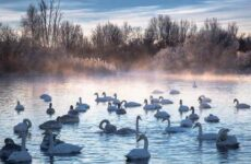 Птицы озёр. Описания, названия, виды и особенности птиц, живущих на озерах
