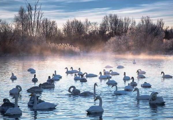 Птицы-озёр-Описания-названия-виды-и-особенности-птиц-живущих-на-озерах-20