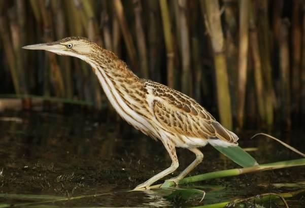 Птицы-озёр-Описания-названия-виды-и-особенности-птиц-живущих-на-озерах-22