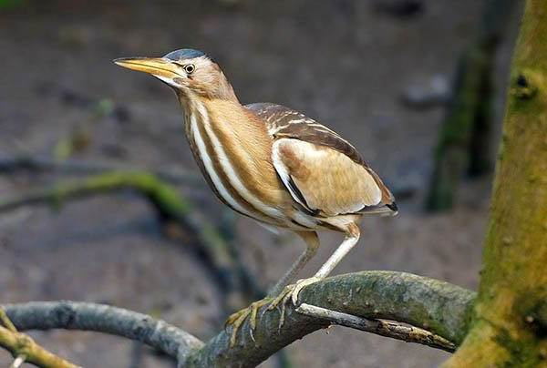 Птицы-озёр-Описания-названия-виды-и-особенности-птиц-живущих-на-озерах-23