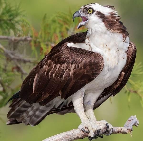 Птицы-озёр-Описания-названия-виды-и-особенности-птиц-живущих-на-озерах-27