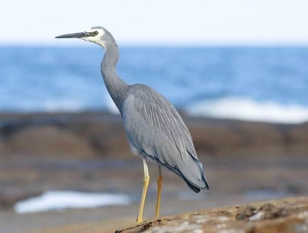 Птицы-озёр-Описания-названия-виды-и-особенности-птиц-живущих-на-озерах-28
