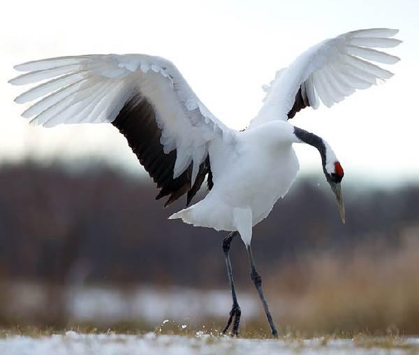 Птицы-озёр-Описания-названия-виды-и-особенности-птиц-живущих-на-озерах-5