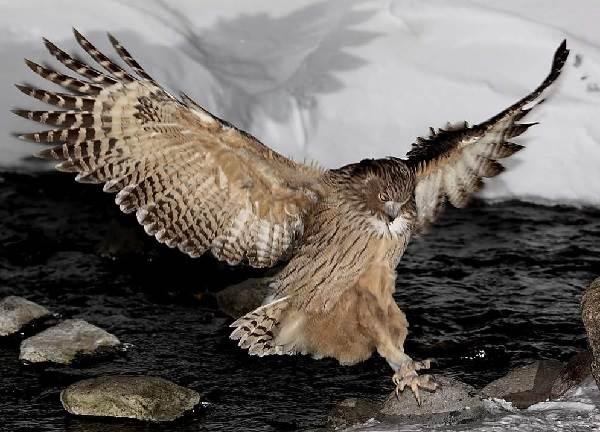 Птицы-озёр-Описания-названия-виды-и-особенности-птиц-живущих-на-озерах-7
