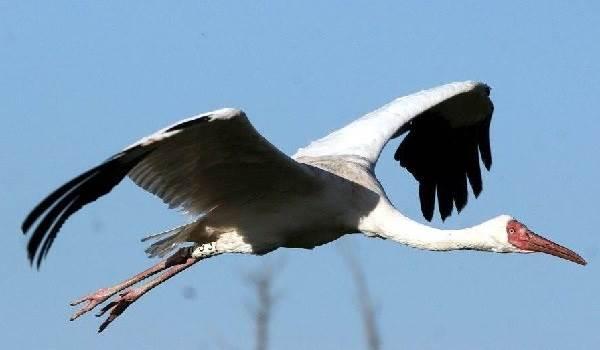 Птицы-озёр-Описания-названия-виды-и-особенности-птиц-живущих-на-озерах-9