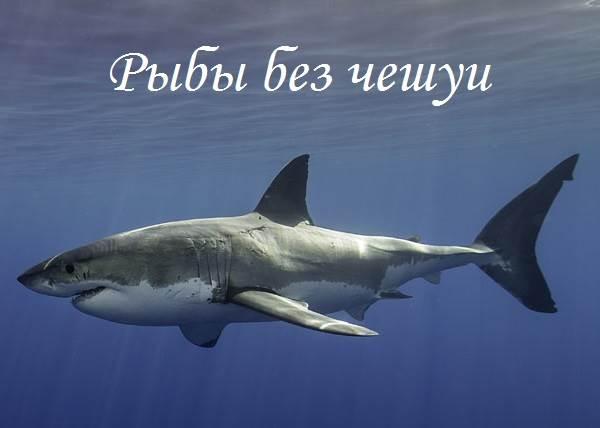 Рыбы-без-чешуи-их-особенности-виды-и-названия-1