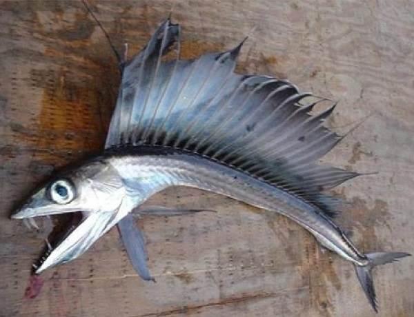 Рыбы-без-чешуи-их-особенности-виды-и-названия-12