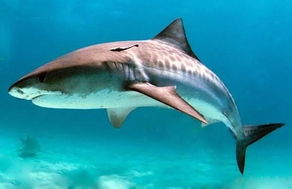 Рыбы-без-чешуи-их-особенности-виды-и-названия-9