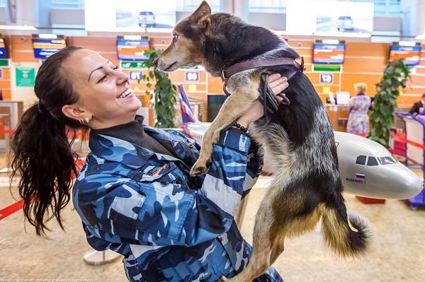 Собака-Сулимова-Описание-особенности-уход-и-содержание-породы-9