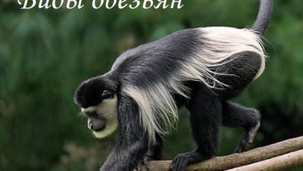 Виды обезьян, их особенности, описание и названия