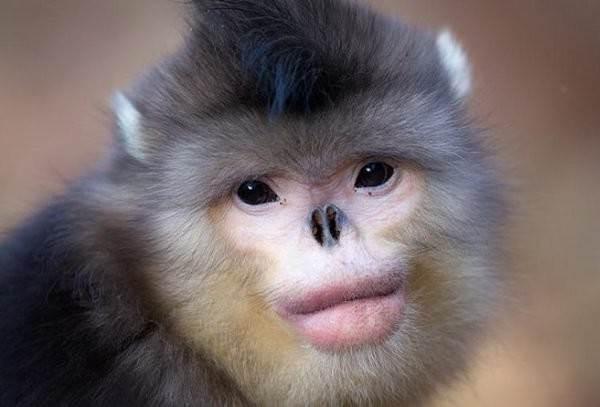Виды-обезьян-их-особенности-описание-и-названия-10