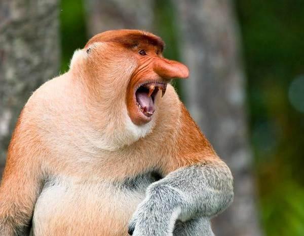 Виды-обезьян-их-особенности-описание-и-названия-11