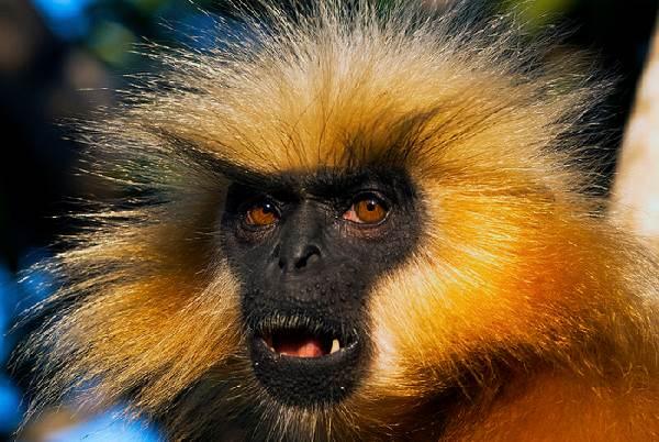 Виды-обезьян-их-особенности-описание-и-названия-14