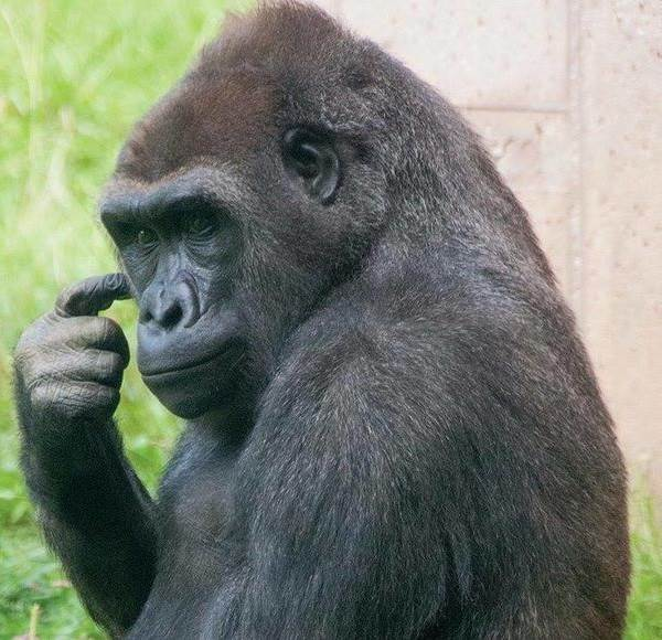 Виды-обезьян-их-особенности-описание-и-названия-15