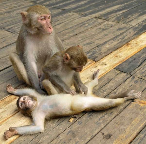 Виды-обезьян-их-особенности-описание-и-названия-2