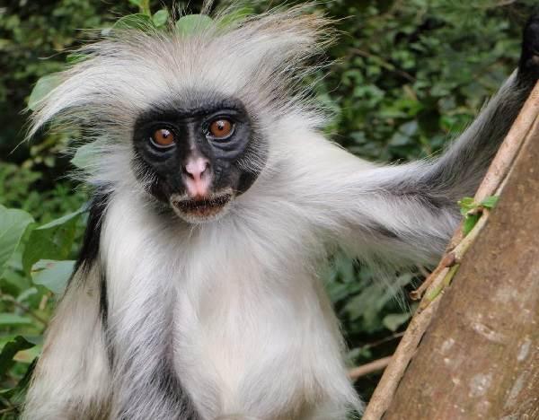 Виды-обезьян-их-особенности-описание-и-названия-20