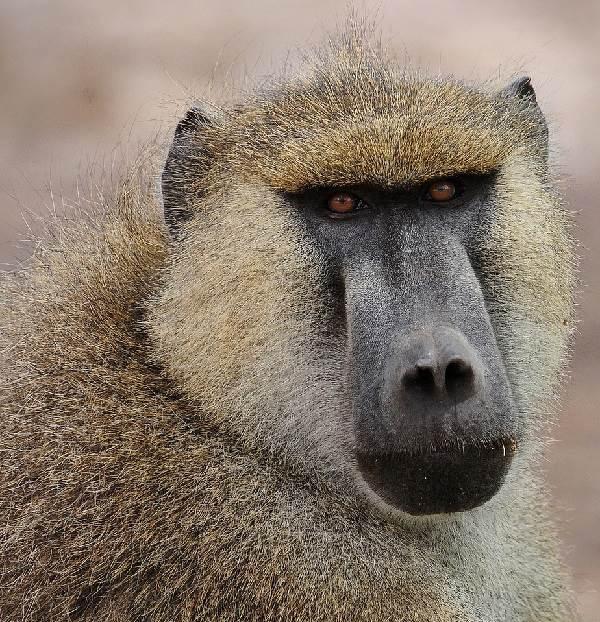 Виды-обезьян-их-особенности-описание-и-названия-23