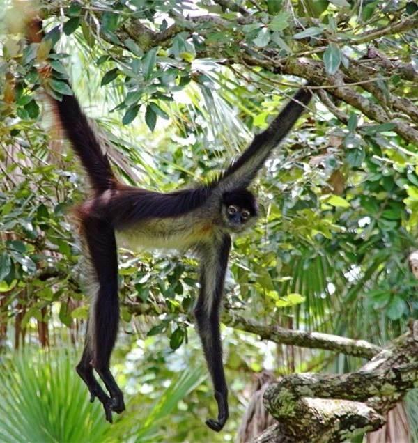 Виды-обезьян-их-особенности-описание-и-названия-24