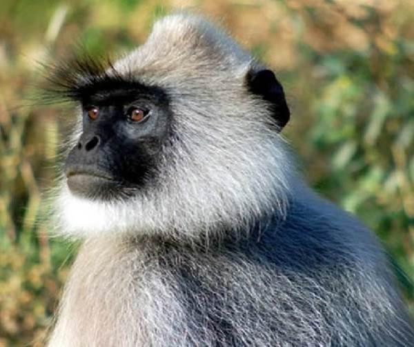 Виды-обезьян-их-особенности-описание-и-названия-26