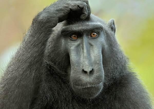 Виды-обезьян-их-особенности-описание-и-названия-27