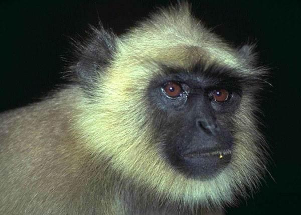 Виды-обезьян-их-особенности-описание-и-названия-3