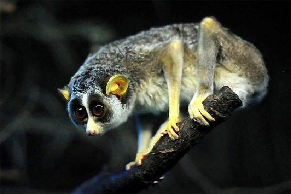 Виды-обезьян-их-особенности-описание-и-названия-4