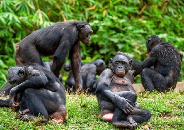 Виды-обезьян-их-особенности-описание-и-названия-5