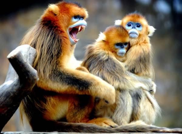 Виды-обезьян-их-особенности-описание-и-названия-6