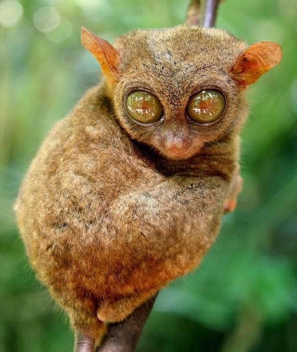 Виды-обезьян-их-особенности-описание-и-названия-7