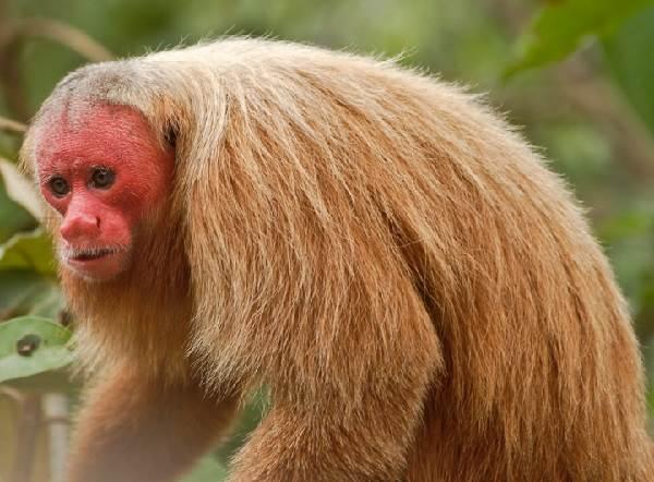 Виды-обезьян-их-особенности-описание-и-названия-8