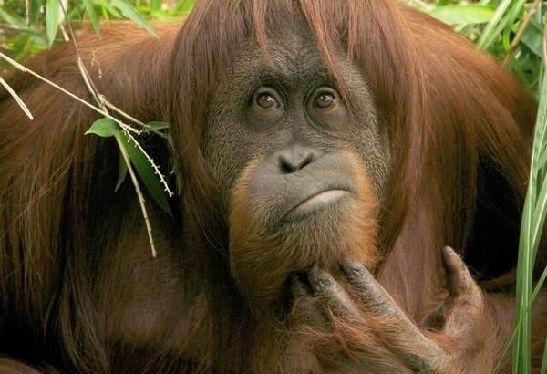 Виды-обезьян-их-особенности-описание-и-названия-9