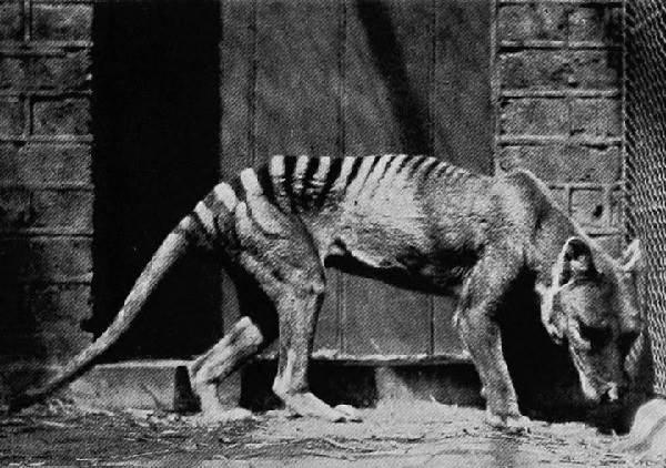 Виды-волков-их-особенности-названия-образ-жизни-и-среда-обитания-4