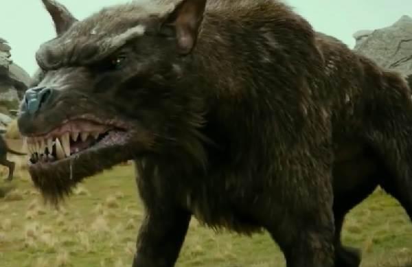 Виды-волков-их-особенности-названия-образ-жизни-и-среда-обитания-5
