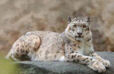 Животные озера Байкал. Описания, названия, виды и особенности животных Байкала