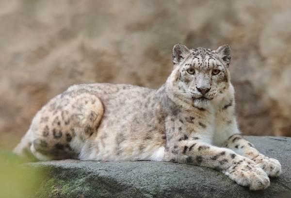 Животные-озера-Байкал-Описания-названия-виды-и-особенности-животных-Байкала-1