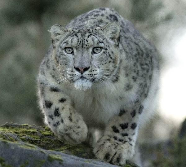 Животные-озера-Байкал-Описания-названия-виды-и-особенности-животных-Байкала-11