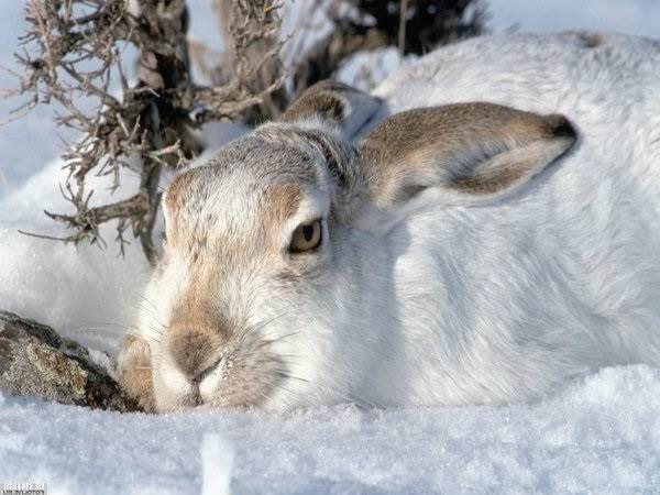Животные-озера-Байкал-Описания-названия-виды-и-особенности-животных-Байкала-13