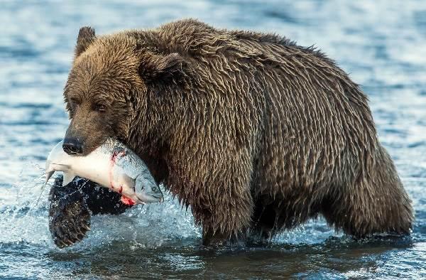 Животные-озера-Байкал-Описания-названия-виды-и-особенности-животных-Байкала-21