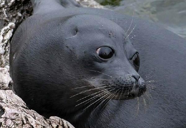Животные-озера-Байкал-Описания-названия-виды-и-особенности-животных-Байкала-3