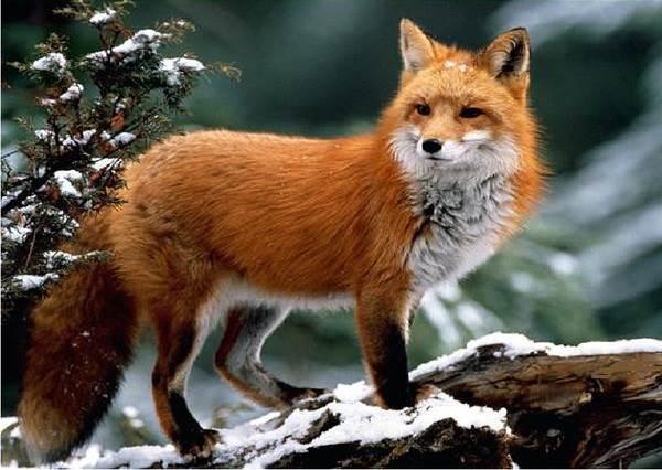 Животные-озера-Байкал-Описания-названия-виды-и-особенности-животных-Байкала-5