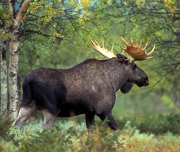 Животные-озера-Байкал-Описания-названия-виды-и-особенности-животных-Байкала-8