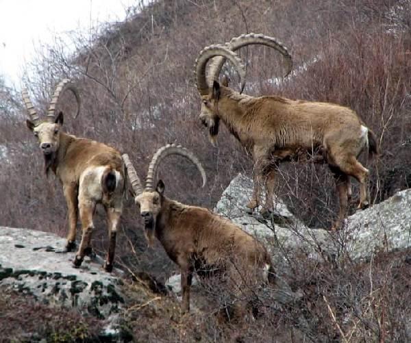 Животные-Сибири-Описание-виды-названия-и-особенности-животных-Сибири-20