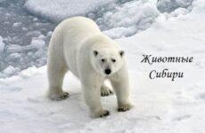 Животные Сибири. Описание, виды, названия и особенности животных Сибири