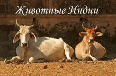 Животный мир Индии. Описания, названия и виды животных Индии