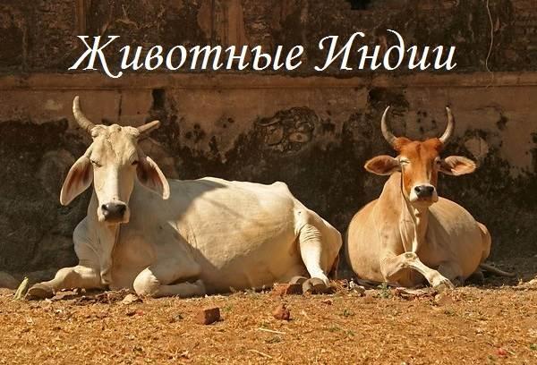 Животный-мир-Индии-Описания-названия-и-виды-животных-Индии-1
