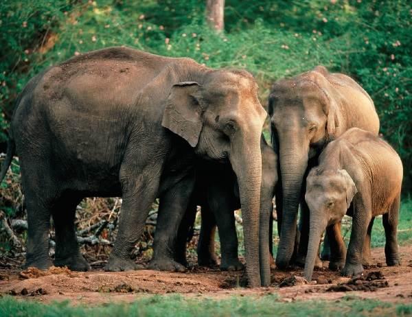 Животный-мир-Индии-Описания-названия-и-виды-животных-Индии-10