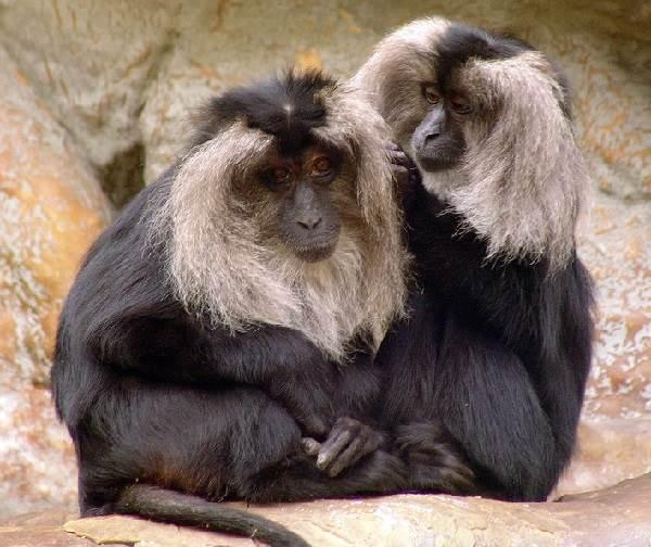 Животный-мир-Индии-Описания-названия-и-виды-животных-Индии-12