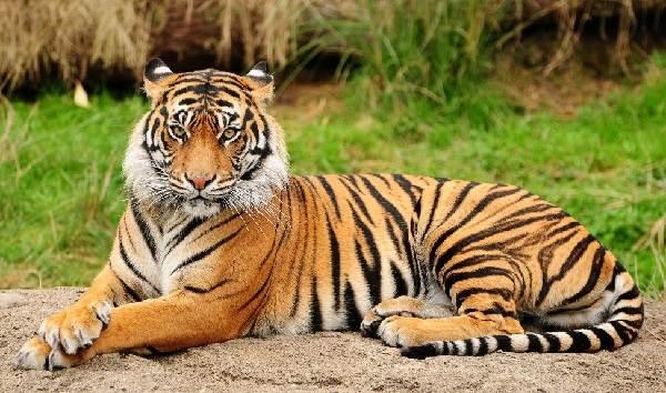Животный-мир-Индии-Описания-названия-и-виды-животных-Индии-13